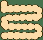 小腸のイラスト